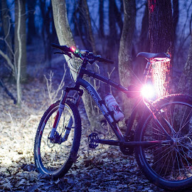 Night in the woods by Poiana Cipolin - Transportation Bicycles ( bike, trees, night, woods, bicycle )
