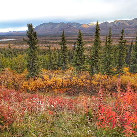 Early Autumn by Patricia Phillips - Landscapes Travel ( alaska autumn colors )