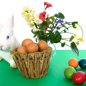 Easter Card With White Bunny by eZeepics Studio - Public Holidays Easter ( seasonal, leaf, egg, decor, religion, nature, card, flowers, flower, animals, painted, symbol, greeting, grass, wallpaper, white, fun, holiday, symbols, eggs, season, food, floral, plant, rabbit, concept, gift, decorative, colorful, cute, spring, pretty, farm, easter egg, happy, tradition, animal, april, bunny, decoration, green, beautiful, funny, traditional, young, easter, red, color, summer, celebration, design )