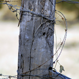 Fence Post by Lisa Matthes - Novices Only Objects & Still Life ( peaceful, close up, rustic, rural, country )