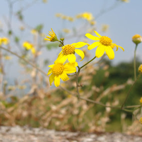 by Mehul Singh - Flowers Flowers in the Wild (  )