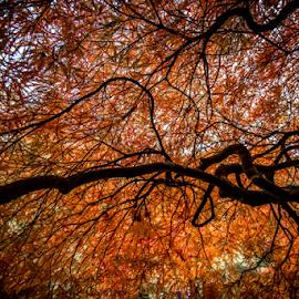 Orange by Darren Sutherland - Nature Up Close Trees & Bushes