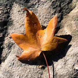 On The Rocks by Geoffrey Wols - Instagram & Mobile iPhone ( rock, colour, leaves, yellow, autumn,  )