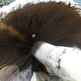 Close Up Gills by Virginia Howerton - Abstract Macro