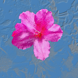 A Flower by Edward Gold - Digital Art Things ( digital photography, textured, violet flower, yellow, artistic object, pink flower, light blue background, digital art )
