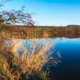 Scenic View over a lake. by Johannes Oehl - Landscapes Waterscapes ( water, plant, baden-wuerttemberg, europe, reflections, lake, scenic, aalkistensee, morning, landscape, idyll, sky, tree, nature, blue, color, maulbronn, outdoor, trees, brown, germany, view, scenery,  )