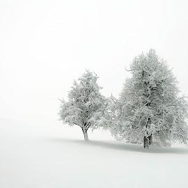 winter by Bojan Berce - Uncategorized All Uncategorized