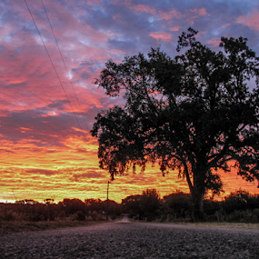 Happy Place by Jamie Hodge - Landscapes Travel ( clouds, nature, backroad, tree, sunset, country,  )