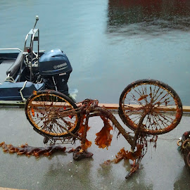 from the sea... by Liliana Lesu - Transportation Bicycles ( bicycles, throw in the sea, sea, garbage, norway )