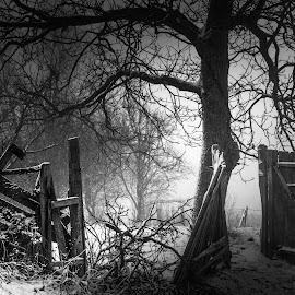 by Vladau Vlad - Black & White Objects & Still Life