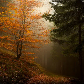 Light fog Heavy Forest by Jerry Kambeitz - Landscapes Forests ( orange, autumn, fog, fall, dark, forest )