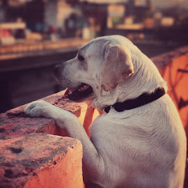 Snooby by Abhudai Singh - Animals - Dogs Portraits ( #enjoyingthesight#peopleonroad#heavytrafic )
