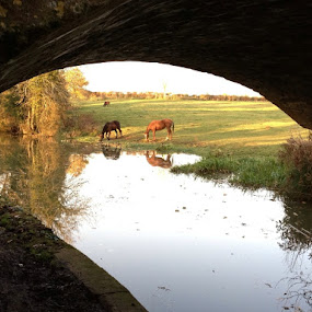 Watering Hole by Andrea Clayton - Novices Only Landscapes ( water, equine, horses, landscape )