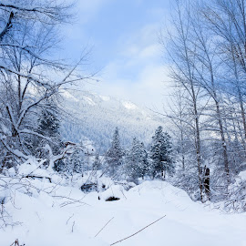 Leavenworth winter by Rod Davis - Landscapes Mountains & Hills ( mountains, winter, cold, blue, snow, forest, scenery, landscape )