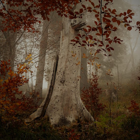 Foggy Woods by Rebecca Pollard - Nature Up Close Trees & Bushes (  )