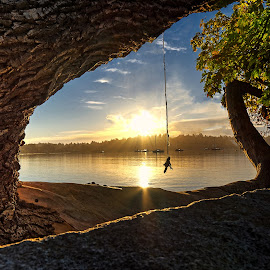 Sunrise Swing by Jerry Kambeitz - Landscapes Beaches ( tree, pacific, ocean, sunrise, swing )