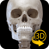 Skeleton | 3D Anatomy APK for Ubuntu