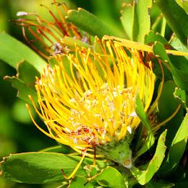 by Fanie van Vuuren - Flowers Flowers in the Wild