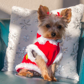Puppy First Christmas by Kathy Suttles - Public Holidays Christmas (  )