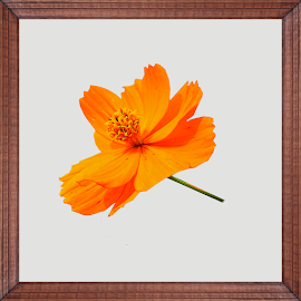 digital flower in frame by Mary Gallo - Digital Art Things ( digital photography, nature, nature up close, digital art,  )