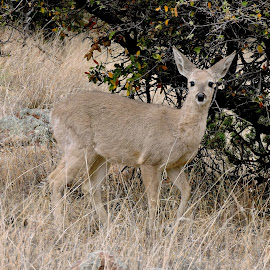 Nature's Camoflauge by Julie Knight - Animals Other Mammals