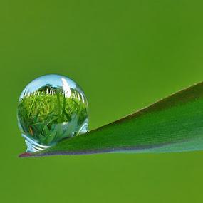 by Handri Fitrido - Nature Up Close Water