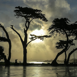 Lovers Point by Kathy Suttles - Nature Up Close Trees & Bushes ( suttleimpressions, monterey, lovers point, california, trees, sunrise )