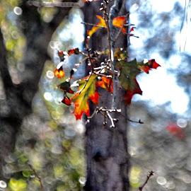 Autumn  by Debbie Squier-Bernst - Nature Up Close Leaves & Grasses