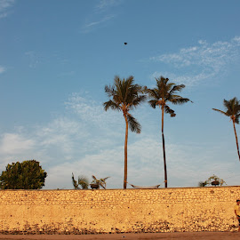 Playing by the sea by Shalini Jain - Landscapes Beaches ( playing, wind, winter, football, coulds, trees, landscape, evening, people )