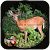Safari Deer Hunter African Animals file APK Free for PC, smart TV Download