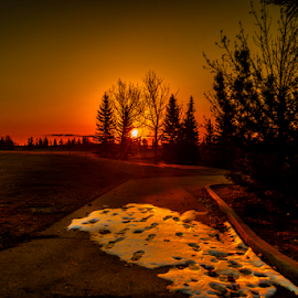 Millwood City Park by Joseph Law - City,  Street & Park  City Parks ( footprints, millwood, melting, alberta, snow, morning glory, trees, sunshine, walkway, city park, spring )