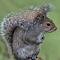 Squirrel 002.jpg