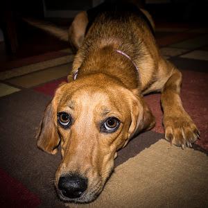 Hound Dog_2013-2.jpg