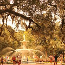 Moss-laden Oak Canopy by Avishek Bhattacharya - City,  Street & Park  Fountains
