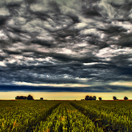 by Laimonas Šepetys - Landscapes Prairies, Meadows & Fields