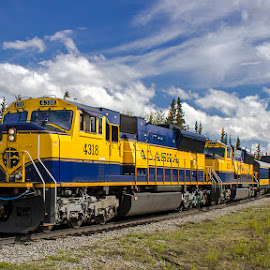 Denali Star Train by Aaron Pedersen - Transportation Trains ( denali, alaska railroad, alaska, passenger trains, trains )