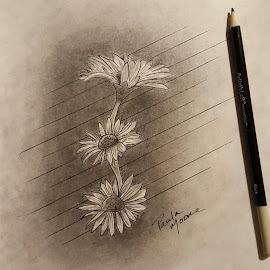 Daisies For A Friend by Paula Moore - Drawing All Drawing ( art, daisies, artist, flowers, pencilart, artwork, pencils )