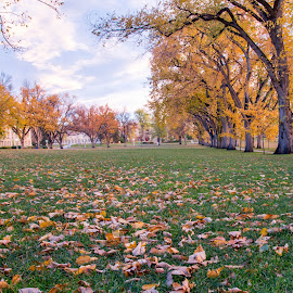 Colo State Oval by Greg Head - Novices Only Landscapes ( grass, fall, colorado, trees, oranges, landscape, leaves )