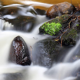 water from the forest by Gil Reis - Nature Up Close Water ( water, forests, life, bio, nature, places )
