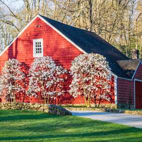 Red Barn by Sandy Hogan - Buildings & Architecture Other Exteriors ( building, red, red barn, barn, spring )