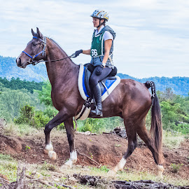 King of The Mountain by Sarah Sullivan - Sports & Fitness Other Sports