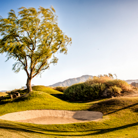 The Course by Kimberly Sheppard - Landscapes Travel ( golf course, bunker, tree, grass, green )