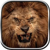 APK Game Angry Lion Wild Simulator for iOS