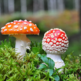 by Eugenija Seinauskiene - Nature Up Close Mushrooms & Fungi