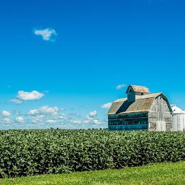 Barn & Beans  by T Sco - Landscapes Prairies, Meadows & Fields ( farm, sky, barn, beans, grain, horizon, landscape, farming )