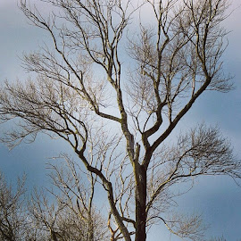 Ome Tree by Perla Tortosa - Nature Up Close Trees & Bushes (  )