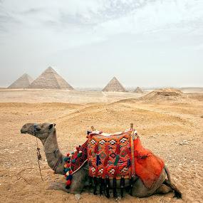 Cairo Egypt by Oguz Sevim - Landscapes Travel