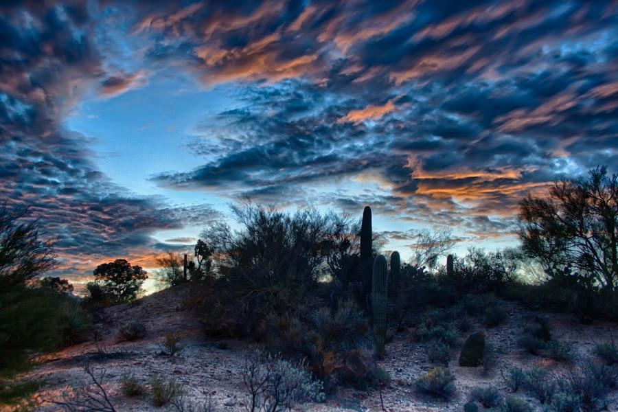 Sunrise over Tucson by Charlie Alolkoy - Landscapes Deserts ( clouds, desert, sky, sunset, sunrise )