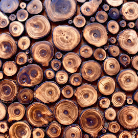 Wood grains by Doug Hilson - Abstract Patterns ( abstract, circles, craft, pattern, wood, india, wood grain )