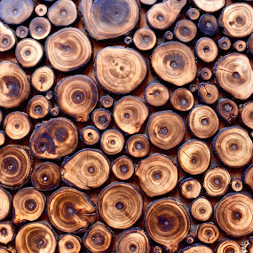 Wood grains by Doug Hilson - Abstract Patterns ( abstract, circles, craft, pattern, wood, india, wood grain,  )